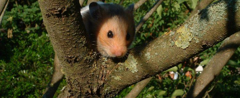 Die Wohnung für Deinen Hamster, das Nagarium