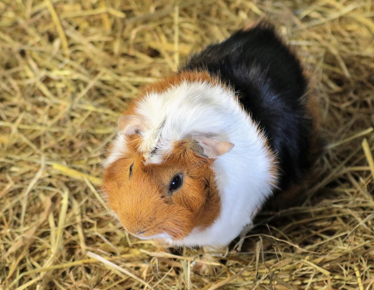 Das Nagarium für Deinen Hamster