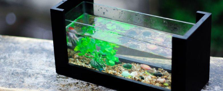 Sucht Euch den passenden Ort für Euer Aquarium
