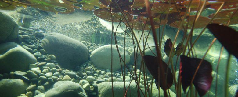 Aquariepflanzen richtig nutzen