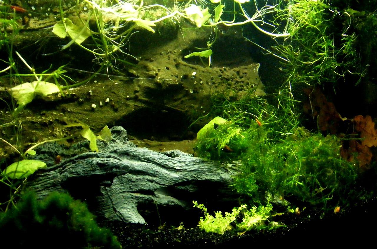 Aquarienpflanzen für Dein Aquarium