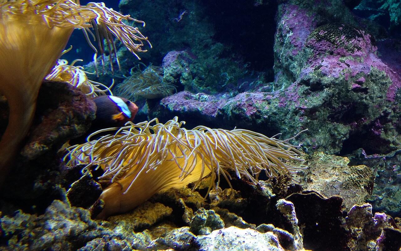 Algen im Aquarium sind nicht immer schädlich