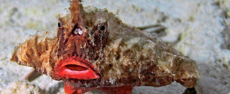 Seefledermäuse im Wasser